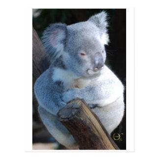 愛らしいコアラ ポストカード