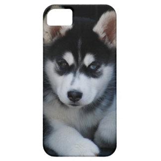 愛らしいシベリアンハスキーのそり犬の子犬 iPhone SE/5/5s ケース