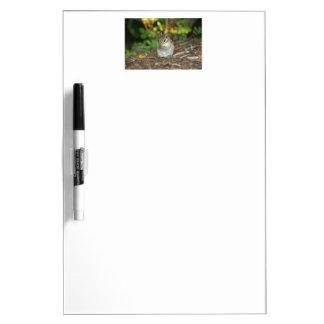 愛らしいシマリスの写真 ホワイトボード