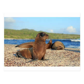 愛らしいベビーのアシカのガラパゴス諸島 ポストカード