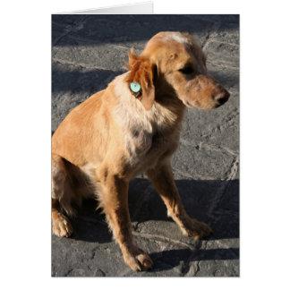 愛らしい雑種犬 カード