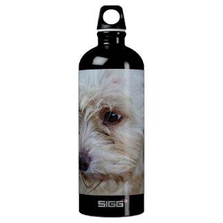 愛らしいcockapooの子犬 ウォーターボトル