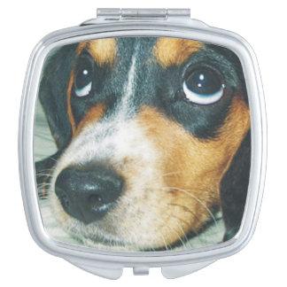 愛らしく大きい目のビーグル犬の子犬