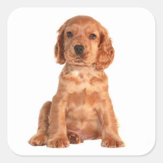 愛コッカースパニエルの小犬のステッカー スクエアシール