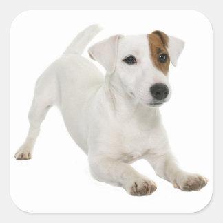 愛ジャックラッセルテリアの小犬の白ブラウン スクエアシール