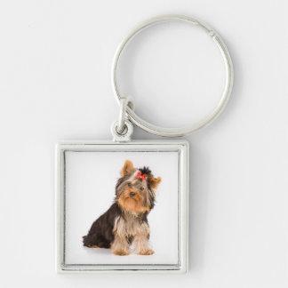 愛ヨークシャテリアの小犬のキーホルダー キーホルダー