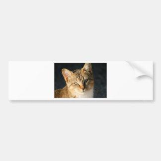 愛情のある目を持つ甘い野生の子ネコ バンパーステッカー