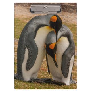 愛撫しているキングペンギンフォークランド クリップボード