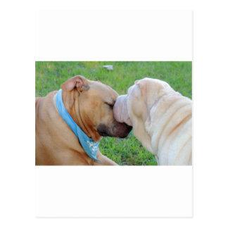 愛犬 ポストカード