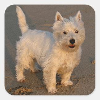 愛西の高地テリアの小犬のステッカーのシール スクエアシール