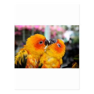 愛鳥のくすぐり ポストカード