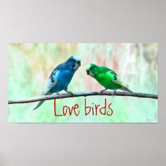 愛鳥、エレガントな多彩なインコ ポスター