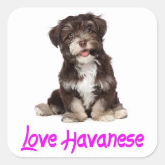 愛Havaneseの小犬のステッカー スクエアシール