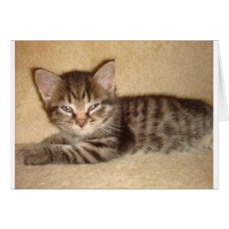 態度の子ネコ カード