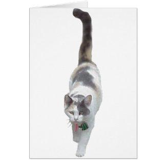 態度、猫 カード