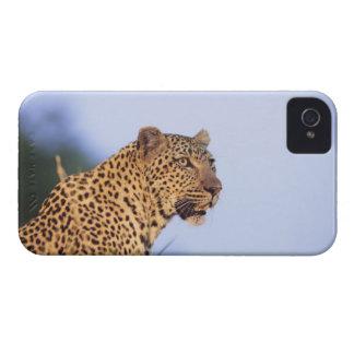 成人男子のヒョウ(ヒョウ属のpardus) Case-Mate iPhone 4 ケース