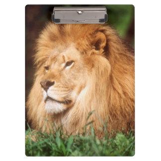 成人男子のライオン クリップボード