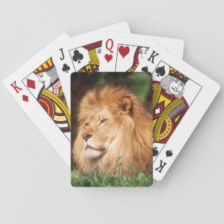 成人男子のライオン トランプ