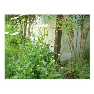 成長する庭 ポストカード