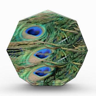 成長を用いる孔雀の尾羽の青い目 表彰盾