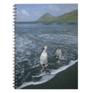 戻っている王室のなペンギン、(Eudyptesのschlegeli) ノートブック