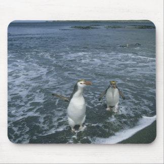 戻っている王室のなペンギン、(Eudyptesのschlegeli) マウスパッド