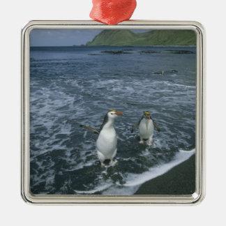 戻っている王室のなペンギン、(Eudyptesのschlegeli) メタルオーナメント