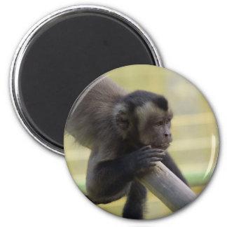 房状のCapuchin猿の磁石 マグネット