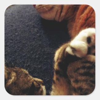 手を握っているかわいい猫 スクエアシール