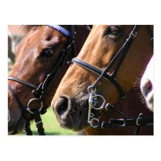 抑制された馬 ポストカード