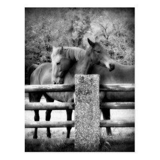 抱き締めている馬-馬愛写真 ポストカード