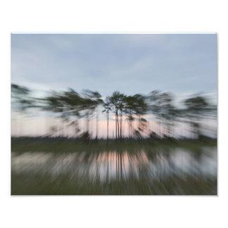 抽象的な木 写真