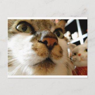 招き猫とセイ postcard