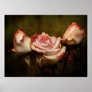 挨りだらけのバラの伸張ポスタープリント ポスター