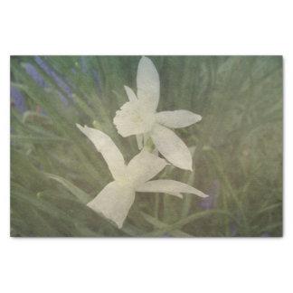 挨りだらけのヴィンテージのラッパスイセンのタリアの写真 薄葉紙