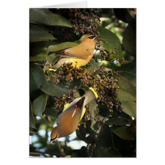挨拶しているヒメレンジャクの鳥 カード