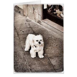 挨拶状のCrabby犬 カード