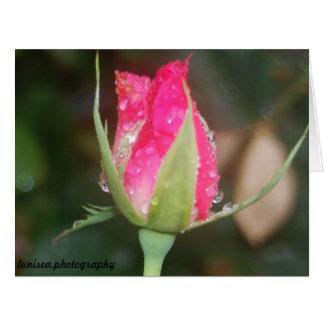 挨拶状:  ピンクのバラのつぼみ カード