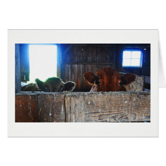 挨拶状-衝撃を与えられる見る納屋の牛 カード