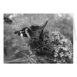 挨拶状- Butterfly黒い及び白の海軍大将 カード