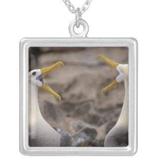 振られたアホウドリのPhoebastriaのirrorataの)組 シルバープレートネックレス
