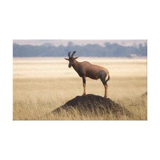 捕食者のための眺望のTsessebeのカモシカ キャンバスプリント