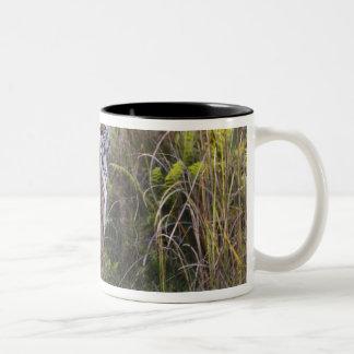 捜すことを試みている高い草のベンガルのtigress ツートーンマグカップ