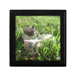 探検の子ネコ ギフトボックス