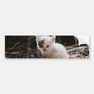 探検の子猫 バンパーステッカー