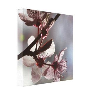 敏感なピンクの桜 キャンバスプリント
