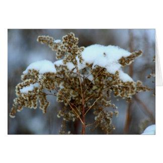 敏感な冬 カード