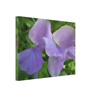 敏感な紫色のスイートピー キャンバスプリント
