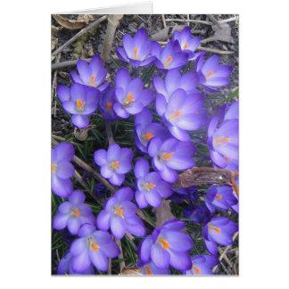 敏感な紫色の花(カード) カード
