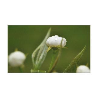敏感な結露の花 キャンバスプリント